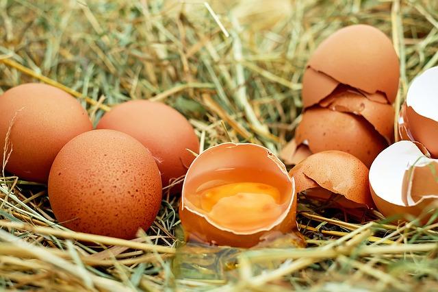 slepičí vejce
